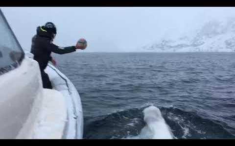 Vas a tomar por qlo del mundo, te sale un bicho blanco y enorme de debajo del mar, y se pone a jugar contigo a la pelota :3