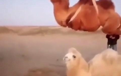 Cuando aparcas el camello en carga y descarga