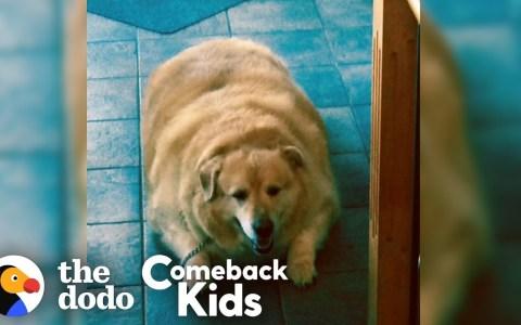 ¿Qué pasa cuando un perro pierde 45 kilazos?
