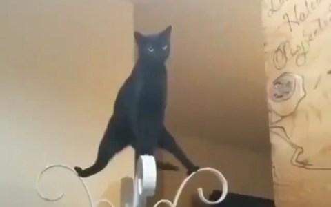 La música que suena en la cabeza de mi gato cuando se pone a hacer gilipoIIeces a las 3am