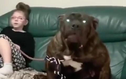 ¿La perrera? Yo adopté a mi perro EN EL AVERNO