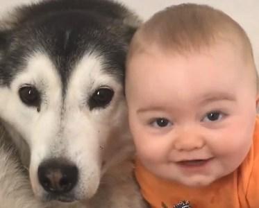 Un bebé creciendo junto a su colega perruno