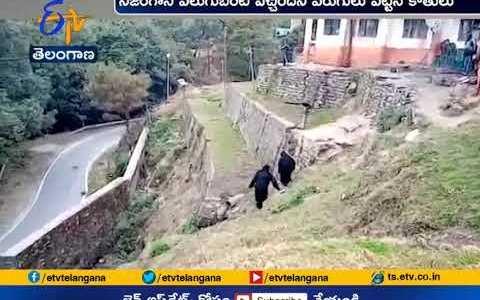 Policías indios se disfrazan de monos gigantes para ahuyentar a un grupo de monos
