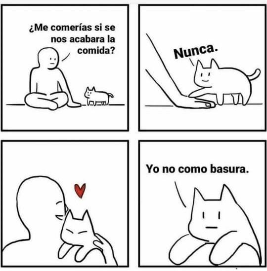 Amor gatuno