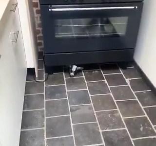 El mundo sería un lugar mejor si todos tuviésemos un cabrito viviendo debajo de nuestros hornos