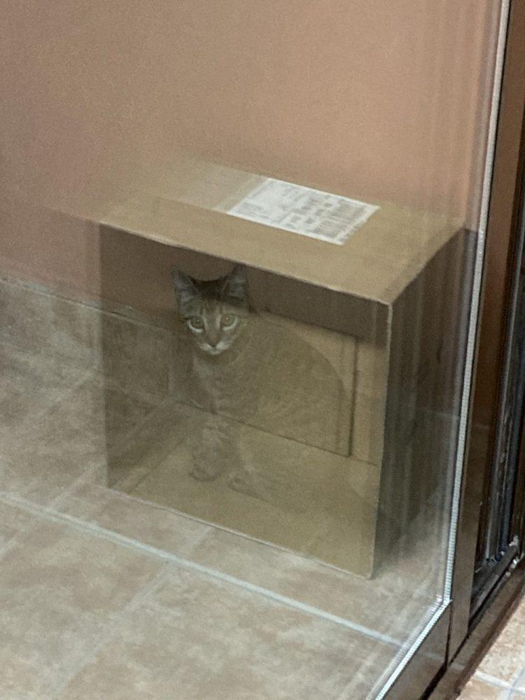El gato de Schrondinger