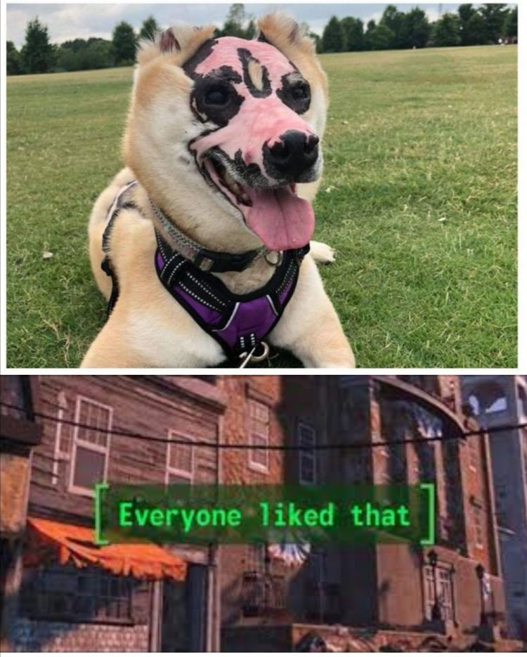 Después de sobrevivir a un incendio, ahora está siendo entrenado para convertirse en perro de terapia para víctimas de quemaduras