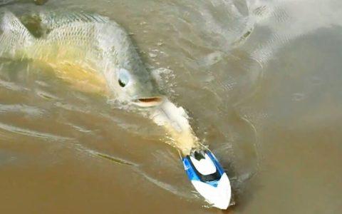 Pescando con un barco radio control