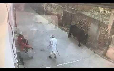 Le daré unos palazos a este toro... ¿Qué podría salir mal?