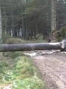 Esto es lo que tienes si contratas a un profesional para liberar una carretera que ha quedado cortada por un árbol caído