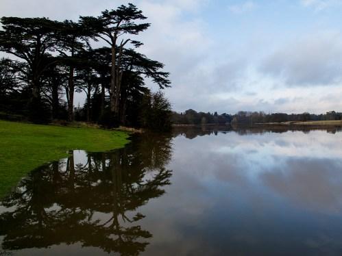 Cedar reflection