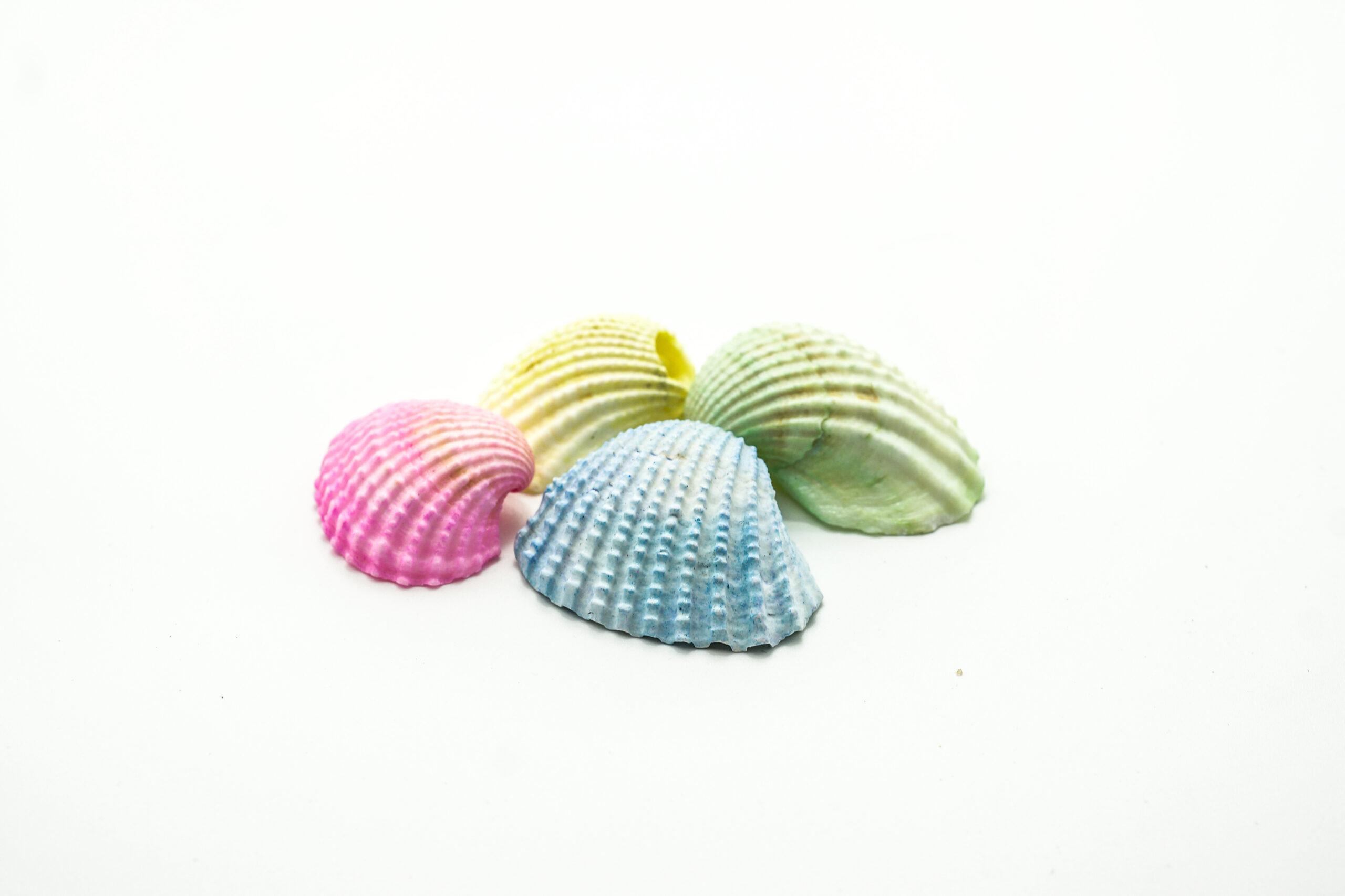 Κοχύλι Πλατύ 4-5 Χρωματιστό