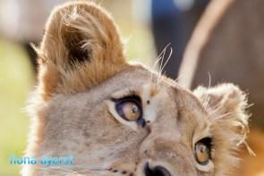Zorgfontein 17 March 2012-153667Copy 1