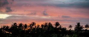 The sun sets behind the coconut trees.