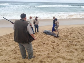 eventually they were shot to end their pain and the decision was made by someone in charge of the strandings unit