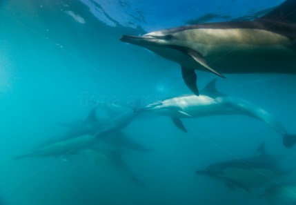 the dolphins came to look at me too