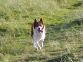 Lleucu running