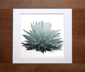 Original woodblock print of Mescal Agave. Also known as Agave Parryi. By Fiona Parrott printmaker. Fiona Parrot prints.
