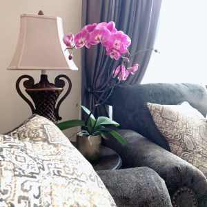 Orchid , Succulents & other Indoor Plants