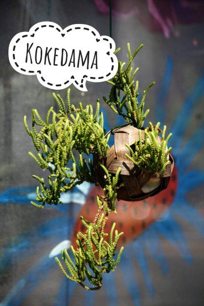 Kokedama