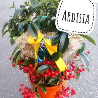 Ardisia