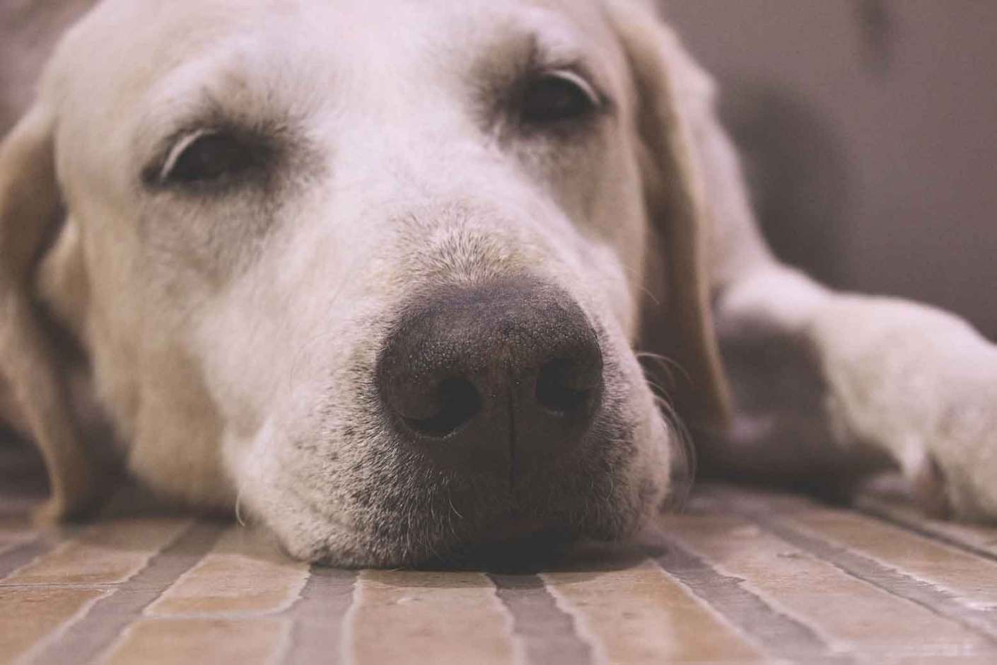 Ensaiando fotos com um cão