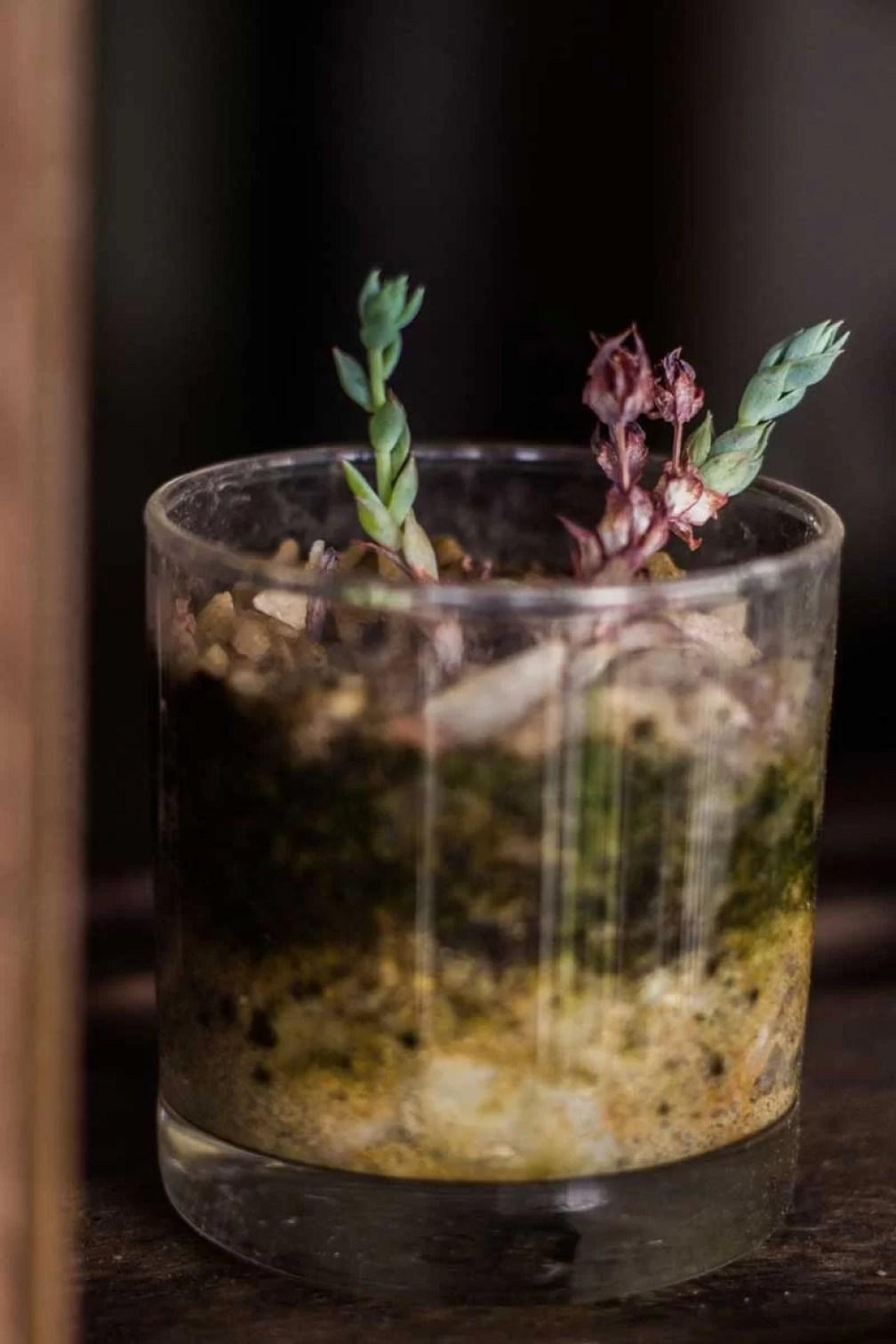 Plantas no pote de vidro