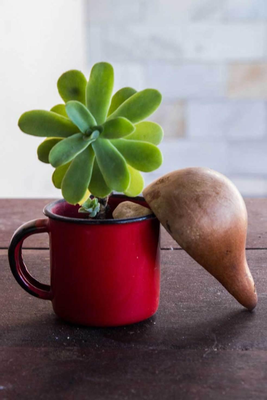 Suculenta plantada em xícara