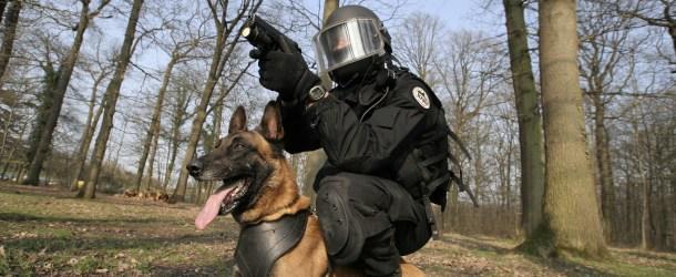 Les chiens d'assaut du RAID