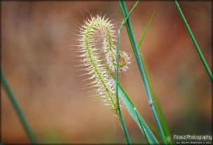 The Twisted Grass Flower