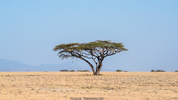 Trees of Mara10
