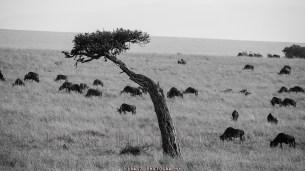 Trees of Mara8 bw