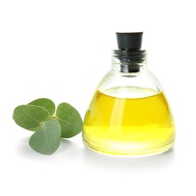 Eucalyptus leaf and oil in a bottle