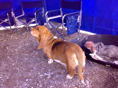 Wilma, the Giant Dog