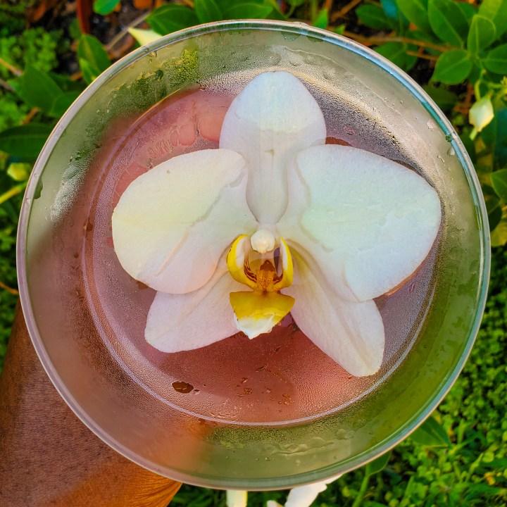 Cranberry Peach Martini