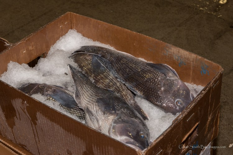 Photos: 2:00 A M  at the Fulton Fish Market – Fire Island and Beyond