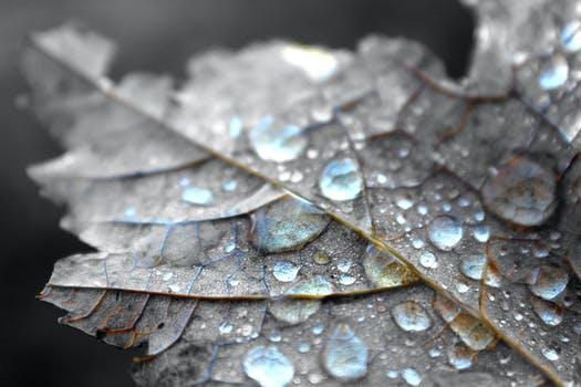 Leaf-06082021