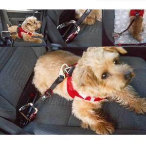 Curli Car sikkerhedssele til hunde