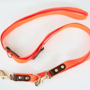 Orange dressurline til hunde, 250 cm lang
