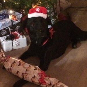 Dyreverdenens Julegave til Hunde