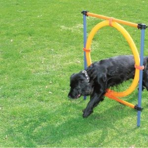 Pawise Agility Forhindring - Med Ring - Ø55cm