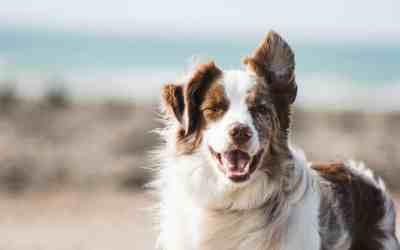Tandhygiejne er vigtigt – også for hunde