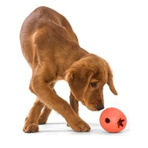 Rumbl, tyggestærkt aktivitets legetøj-L