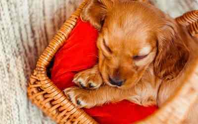 Hundeseng – din hunds (måske) yndlingssted!