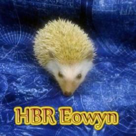 HBR Eowyn