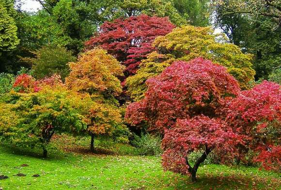 trees changing color