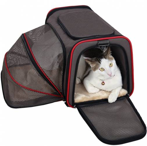 amazon pets carrier with cat