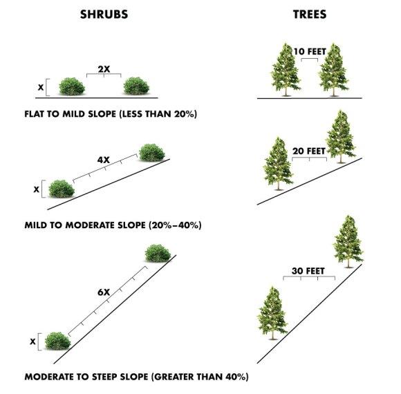 Minimum Tree and Shrub Horizontal Clearance Diagram.