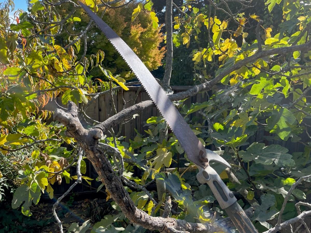 UC Master Gardener pruning pix Jan