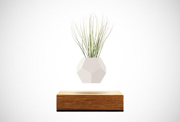 Lyfe Plant